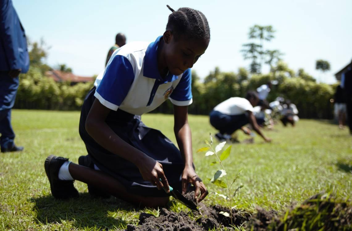 Un jeune Congolais plantant un arbre.